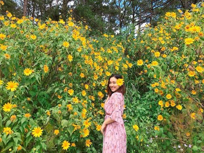 Du lịch Ba Vì ngắm hoa Dã quỳ