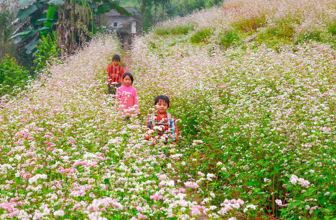 Hà giang 3N2Đ - Mùa hoa tam giác mạch nở rộ